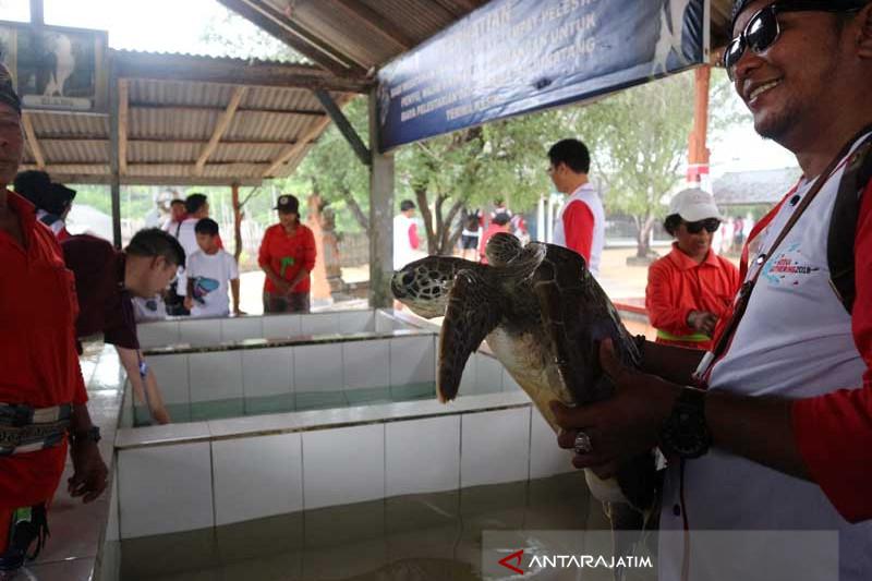 Berselfie dengan Penyu di Tanjung Benoa