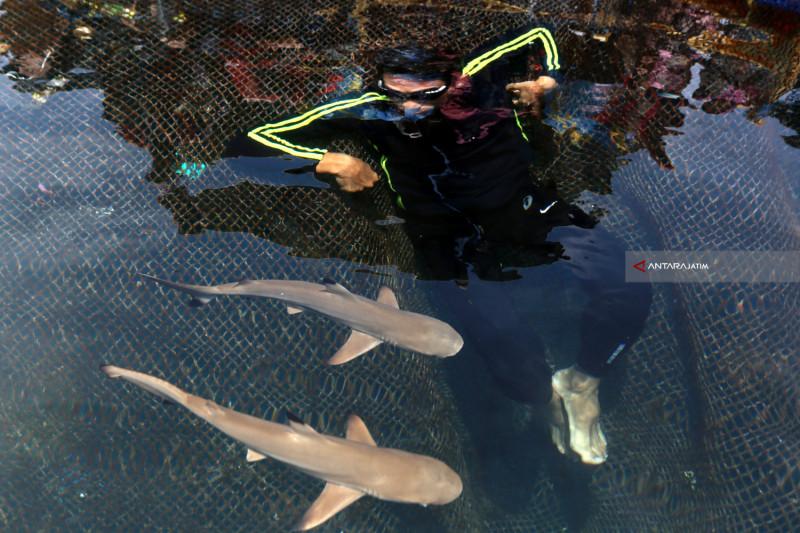 Wisata Berenang Dengan Hiu