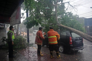 Hujan-Angin di Tulungagung Sejumlah Pohon Tumbang