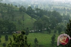 Pesanan Vila Jelang Akhir Tahun 2017 Meningkat