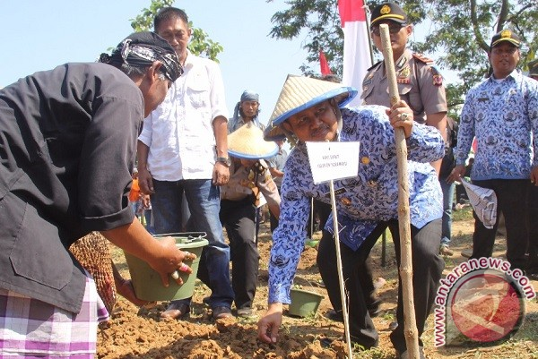 Indramayu Targetkan Tanam 10 Ribu Hektare Kedelai