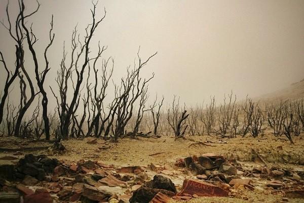 Hutan Mati Papandayan Yang Semakin Nyaman
