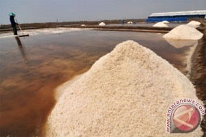 Harga Garam di Petani Cirebon Turun Drastis