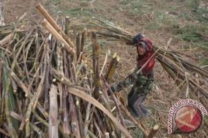 Petani tebu mengadu ke Presiden melalui surat terbuka