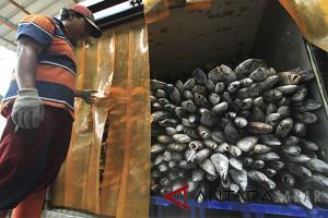 Kementerian akan bangun 60 Tempat Pelelangan Ikan higienis