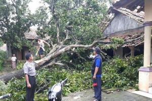 Puting Beliung Rusak 107 Rumah di Indramayu