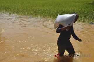 Lahan Pertanian Terendam Banjir