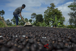 Pertumbuhan Ekspor Kopi Indonesia