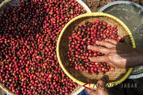 Perlu anak muda kembangkan masa depan perkebunan kopi