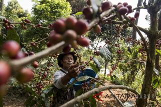 Pemkab Garut minta hotel promosikan kopi lokal