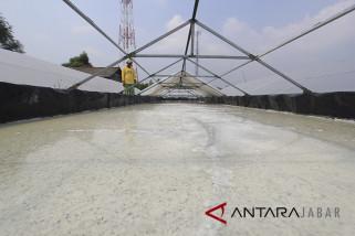 Harga Garam di Cirebon anjlok