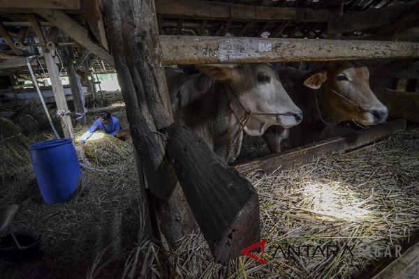 Disnak Jabar targetkan 15.000 hewan ikut asuransi ternak