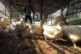 Target asuransi hewan ternak