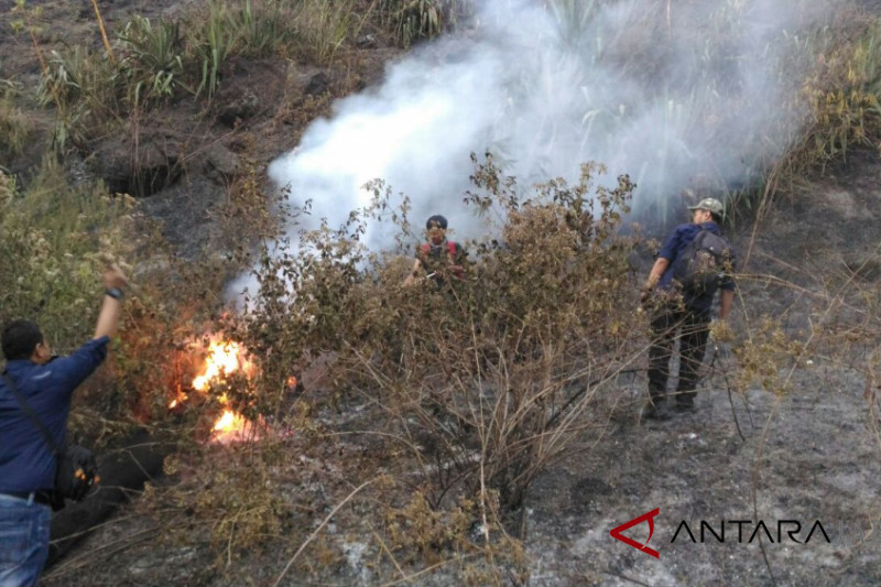 Kebakaran hutan Gunung Guntur mencapai 8 hektare