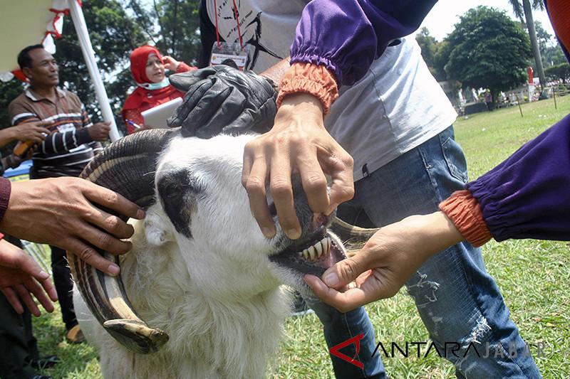 Pemeriksaan hewan kurban