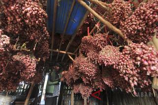 Target ekspor bawang merah