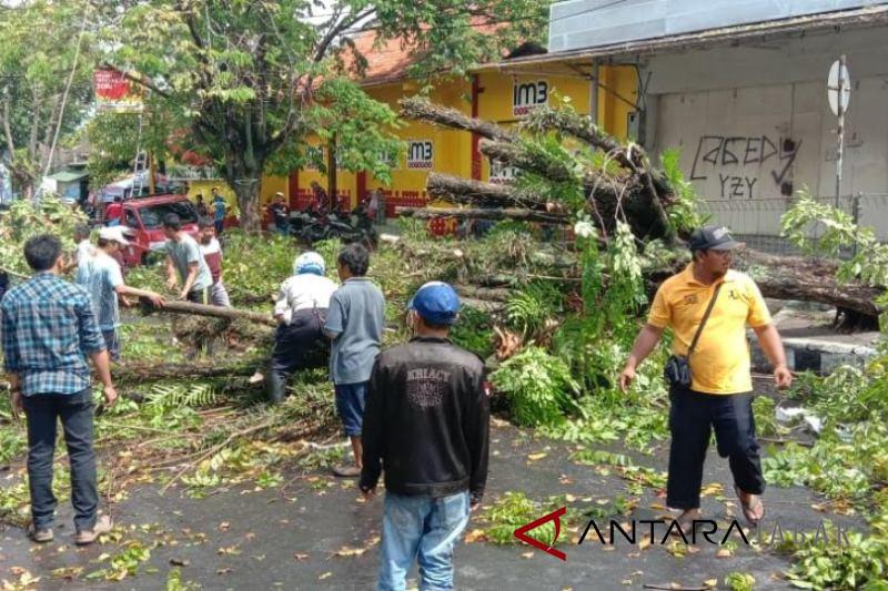 Pohon mahoni jalan protokol Cianjur  tumbang akibat hujan deras