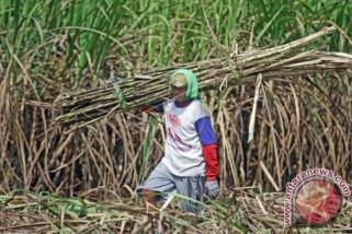 Tahun pahit bagi petani tebu di Cirebon, kenapa?