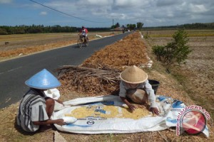 Anas: produksi kedelai di Indonesia defisit