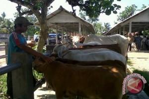 Harga sapi di Kulon Progo stabil tinggi