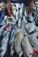 Produksi PPN Capai 1,1 Ribu Ton Ikan