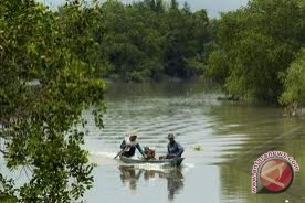 LSM Sampan: Penanaman Mangrove Cegah Abrasi
