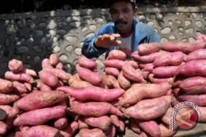 Kalbar Masuk Prioritas Pengembangan Agroindustri Umbi-umbian