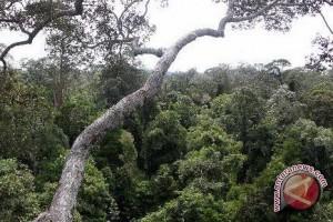 BP-REDD+ : Masyarakat Adat Mampu Jaga Hutan