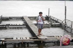 Ribuan Kilogram Ikan Mati di Tambak Sungai Landak