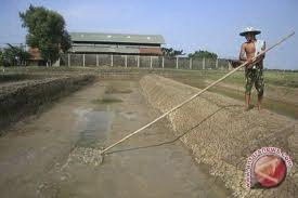 Kalbar Ajukan Alokasi Distribusi Garam Impor