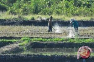 Usulkan tinjau ulang luas lahan sawah se-Kalbar
