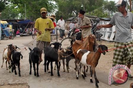 Ilustrasi - Kambing untuk hewan kurban. (FOTO ANTARA)