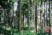 Indeks Tata Kelola Hutan Diluncurkan