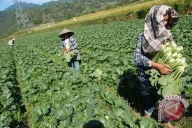 Dinas Pertanian Antisipasi Elnino Terhadap Kebutuhan Pangan