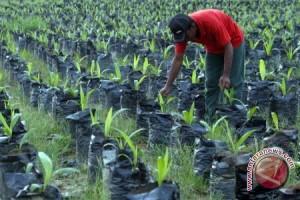 BPMPTSP Kalbar : Tidak Ada Pengajuan Investasi Sawit