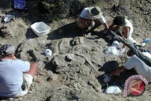 Arkeolog Temukan Ekor Dinosaurus di Meksiko