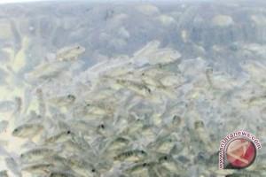 Wabup: Mempawah Miliki Potensi Besar Budidaya Ikan