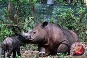 WWF Indonesia Gelar Kegiatan Publik