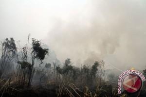 BNPB: 126 Titik Api Karhutla Di Kalbar