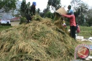 Petani harapkan kehadiran Penyuluh Pertanian