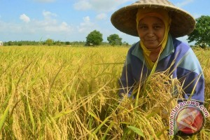 Kementerian Pertanian Malaysia Kunjungi Sambas