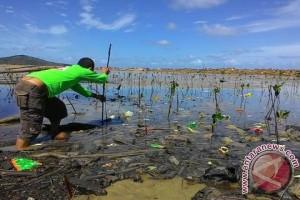 BPSPL Pontianak Sebar 300 Ribu Mangrove