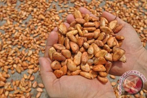 Wapres ingin Indonesia Jadi Penghasil Kakao Sedunia