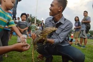 BKSDA Singkawang Lepaskan Empat Ekor Biawak