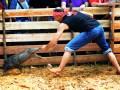 Lomba Tangkap Babi
