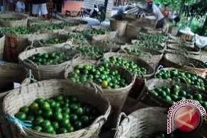 Realisasi Bantuan Pengembangan Jeruk Di Sambas Oktober