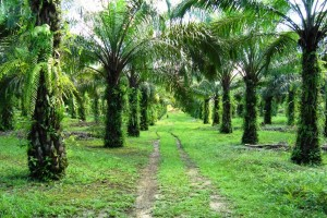 Bupati : Perusahaan Wajib Bangun Sistem Sawit Lestari