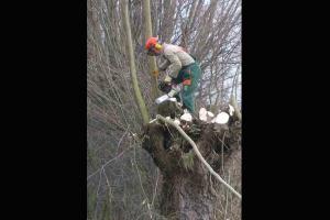 Dinas Imbau Masyarakat Singkawang Pangkas Pohon