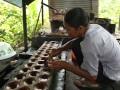 Pembuatan Gula Aren Tradisional