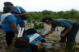 Lantamal Pontianak Ikut Tanam Pohon Mangrove di Singkawang